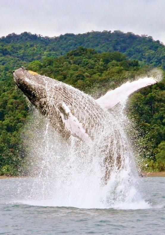 Plan Avistamiento de Ballenas Ecolodge El Almejal